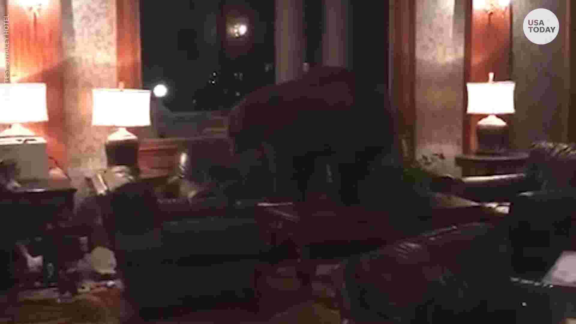 """Мечка посети хотела, вдъхновил Стивън Кинг за """"Сияние"""" (ВИДЕО)"""