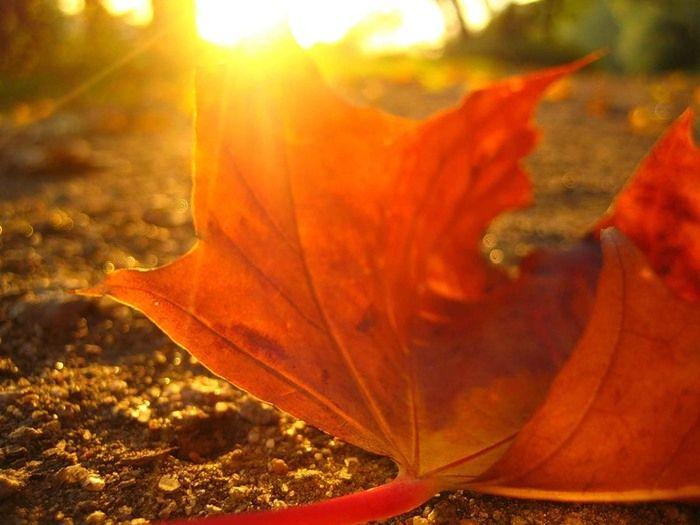 Вкарваш го и за да се стоплиш, и още причини да харесваш есента