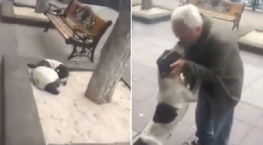 Мъж намери кучето си след 3 години (ВИДЕО)