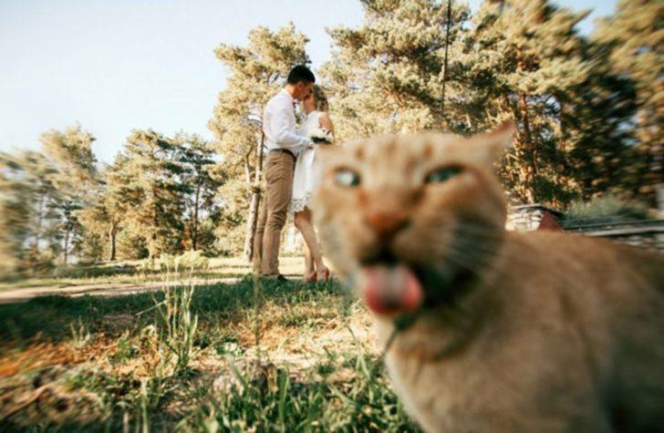 Шантави котки, които ще ти оправят деня (СНИМКИ)