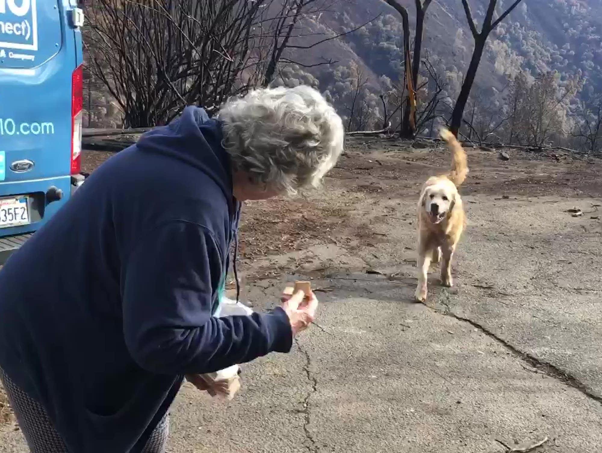 Куче чака месец стопаните си около изгорялата им къща