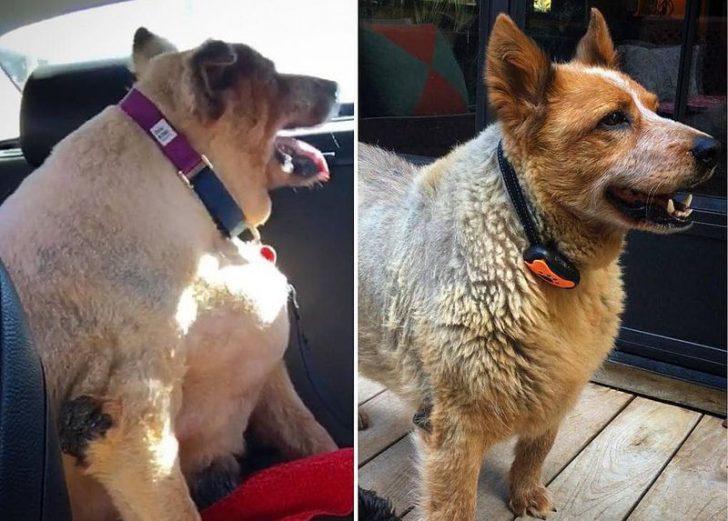 Кучешка мотивация: Четириноги, които се взеха в лапи и отслабнаха