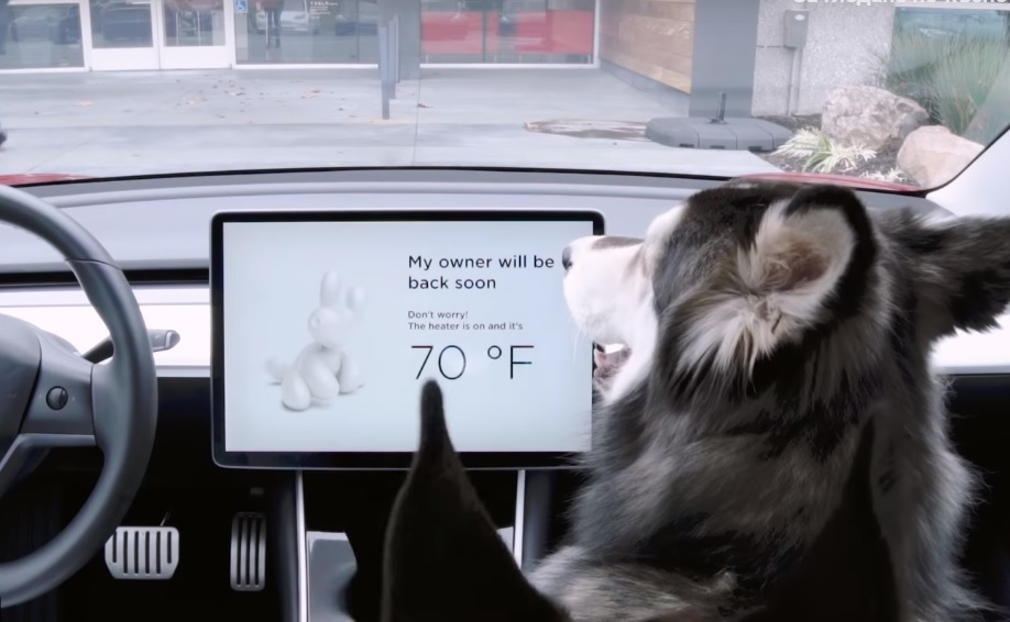 ВИДЕО: Тесла представя режима за кучета