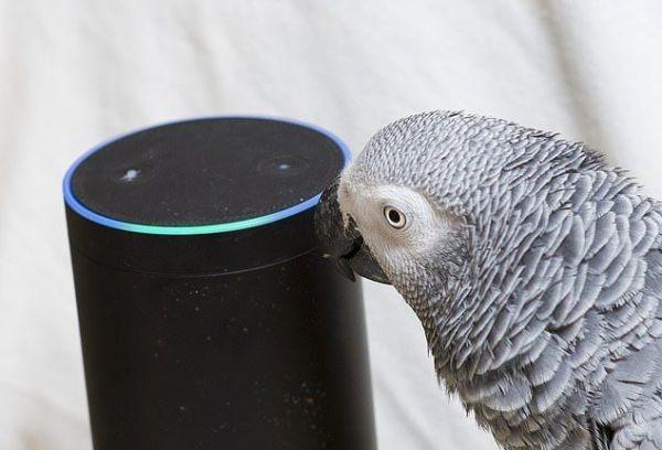 Папагал едва не фалира собственика си заради покупки в интернет