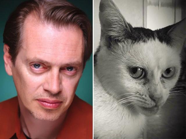 Котката, която прилича на Стив Бушеми (СНИМКИ)