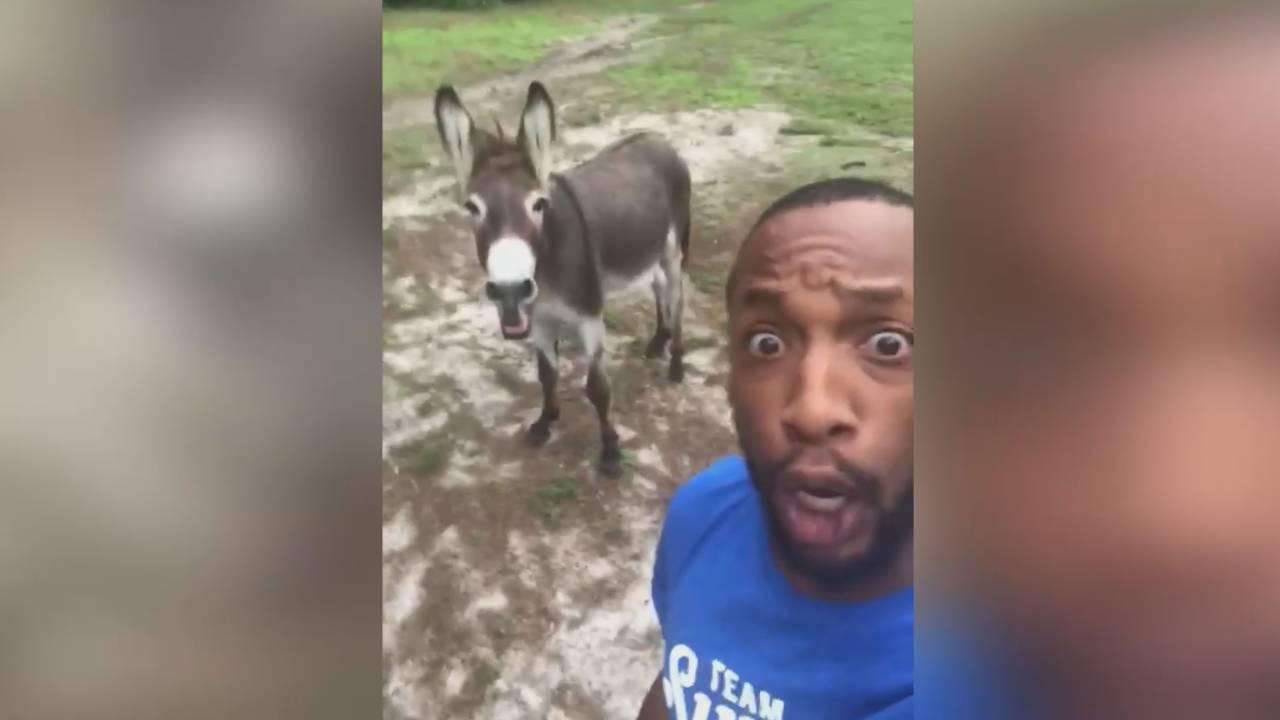Поздрав с този музикален дует на мъж и магаре (ВИДЕО)