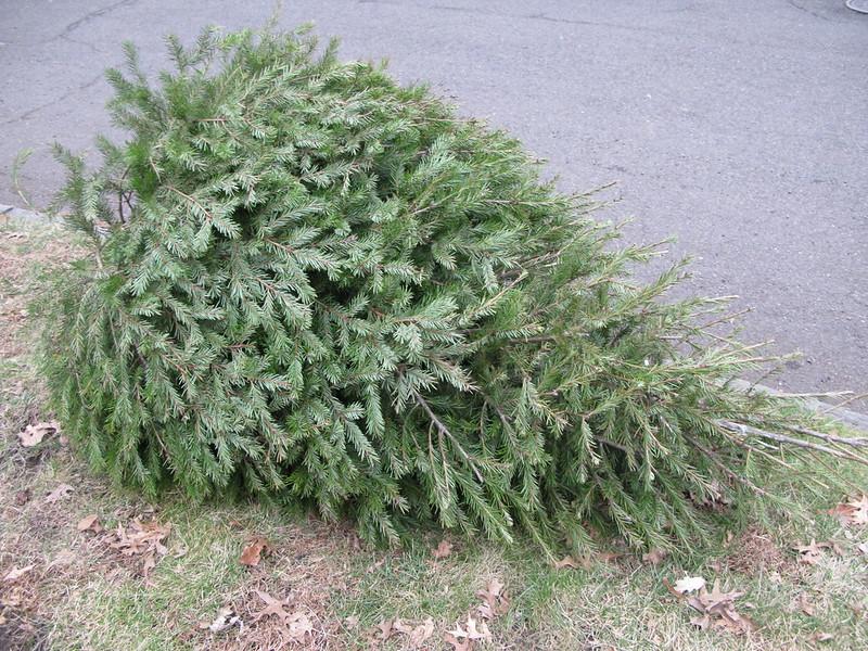 Крадци откраднаха елхата на пожарната служба