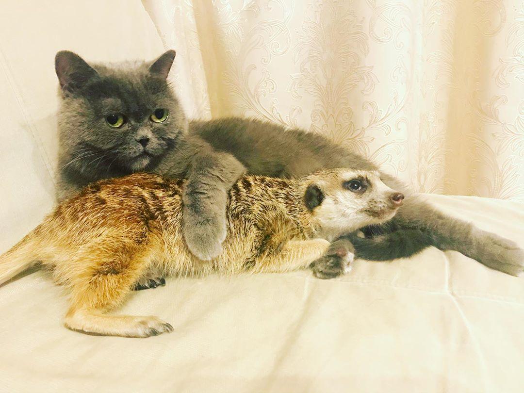 Сурикат и котка са най-добри приятели (ВИДЕО)