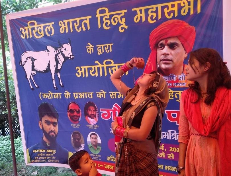 В Индия пият кравешка урина срещу коронавирус