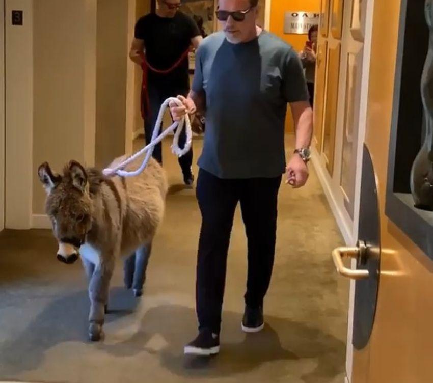 Новият приятел на Арнолд е магаре (ВИДЕО)