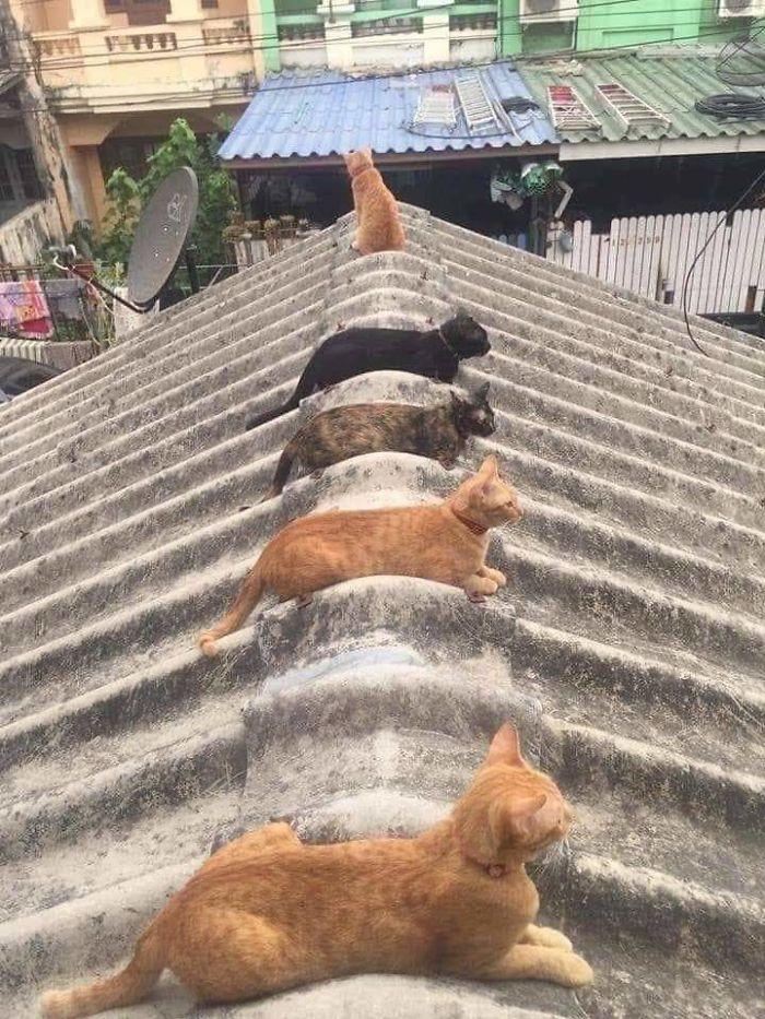 """СНИМКИ: 10 котки и кучета, които разбират какво означава """"социална дистанция"""""""