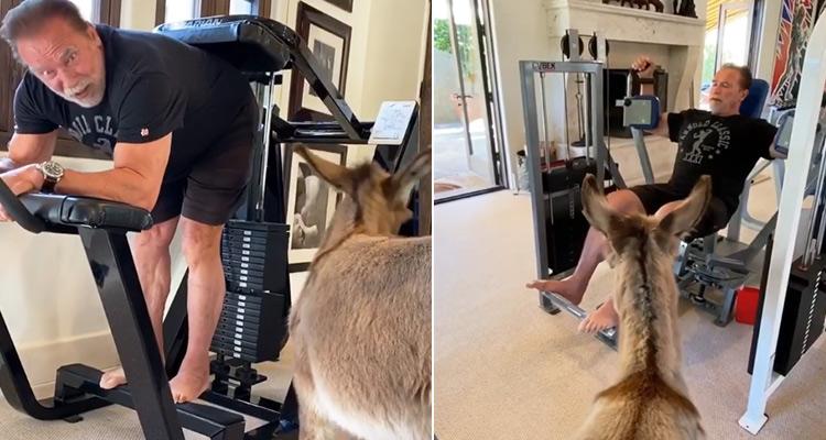 Арнолд има нов партньор във фитнес залата (ВИДЕО)
