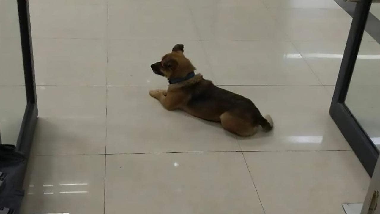 Куче чака 3 месеца в болница своя починал стопанин
