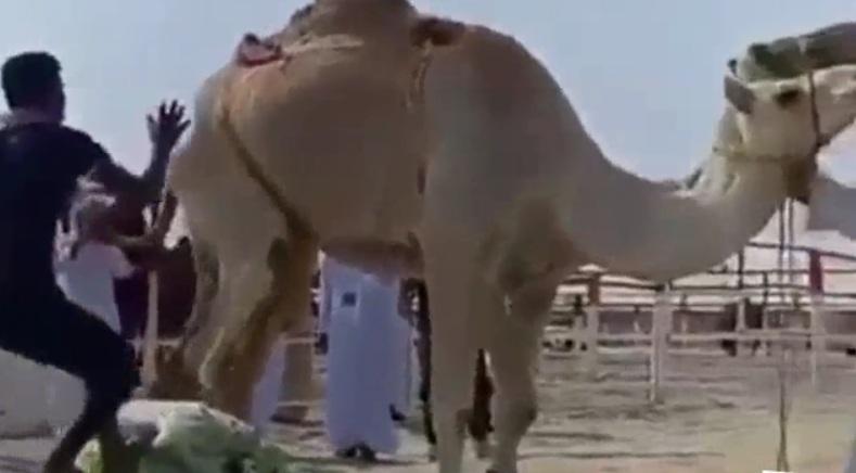 ВИДЕО: Когато и камилата знае къв си боклук