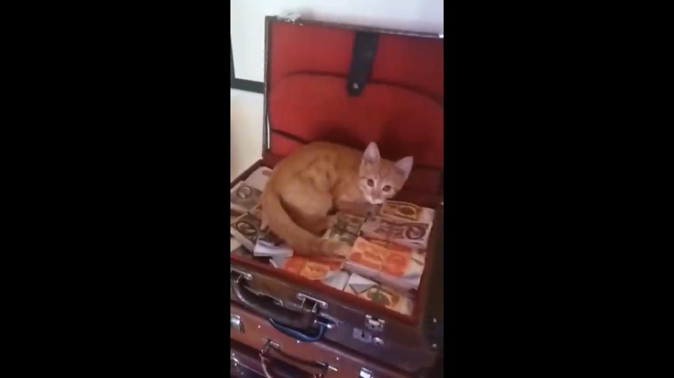 Котка краде оборота от руска кръчма (ВИДЕО)