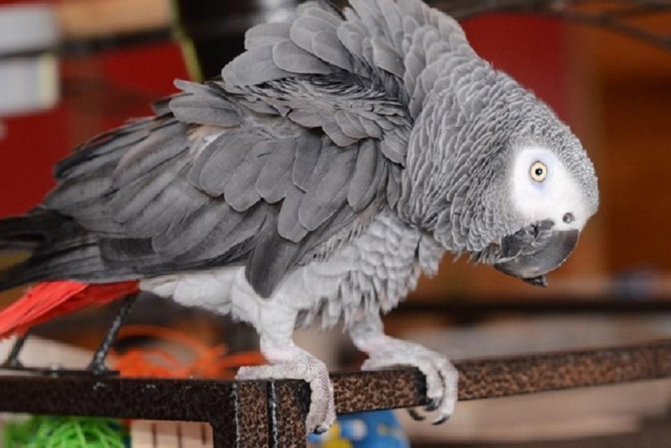Без папагали в британски парк – псували яко посетителите