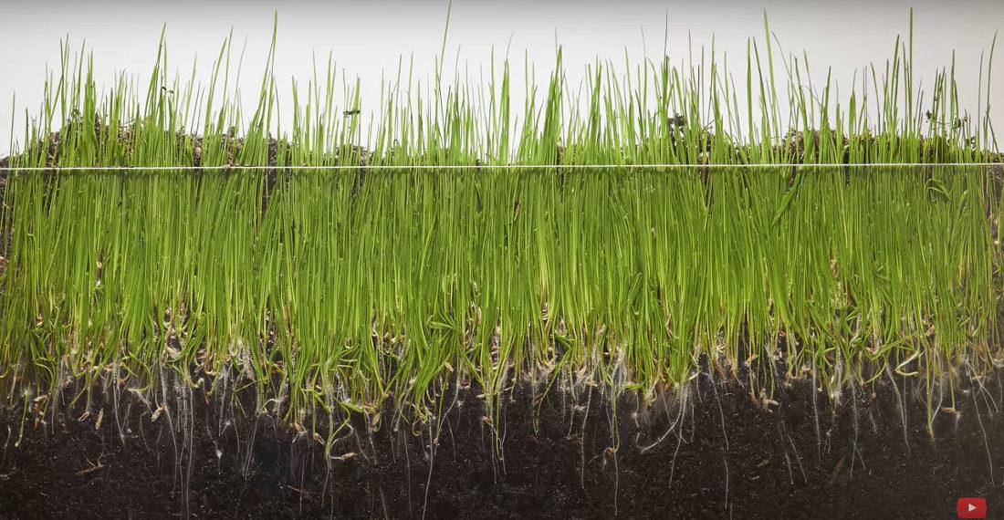 ВИДЕО: Когато си ядосан, гледай това – как тревата расте