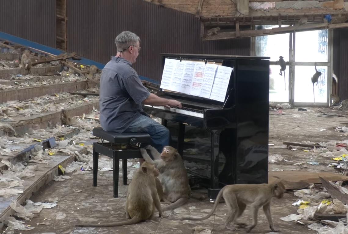Пианист изнася концерти за маймуни, за да не бъдат агресивни