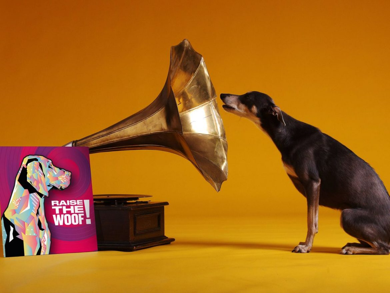 Пуснаха първата коледна песен за кучета (ВИДЕО)
