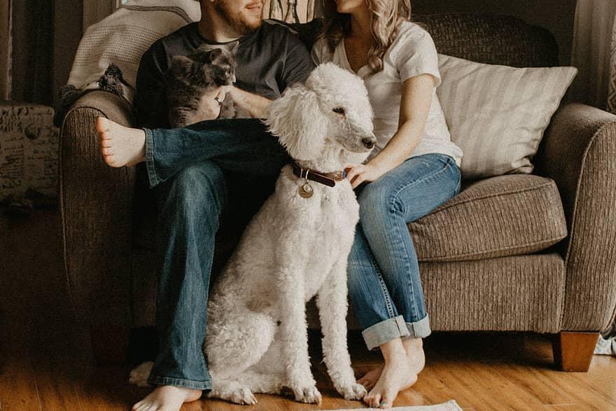 Влюбените съобразяват интимния си живот с домашните си любимци