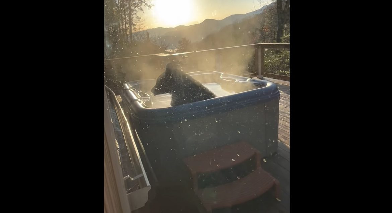ВИДЕО: Голем кеф! Мечка се топи в джакузи